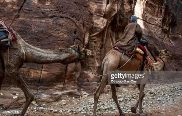 camel tow - jordanian workforce stock pictures, royalty-free photos & images