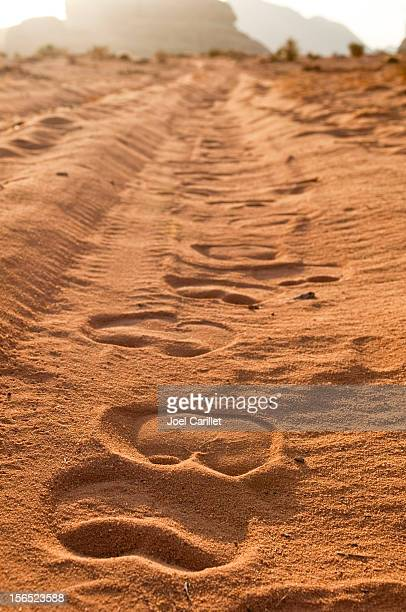 Camel tracks at sunrise in Wadi Rum, Jordan