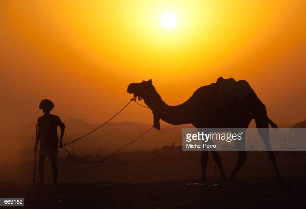 Camel trader prepares for the night November 20 1999 at the annual Camel Fair held every November in Pushkar a town in Rajasthan India This is the...