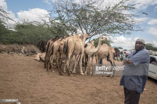 Camel trader seen showing off his wares at a market in the refugee camp. Dadaab is one of the largest refugee camps in the world. More than 200,000...