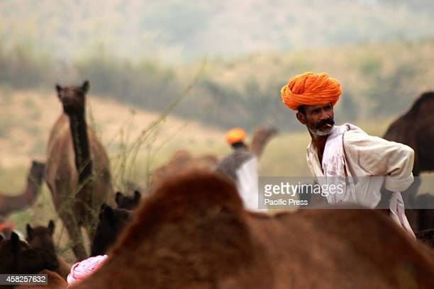 A camel trader smoke at Pushkar Rajsthan Tourists are most interested to visit the Pushkar to explore the rugged terrain of the Great Indian Desert...