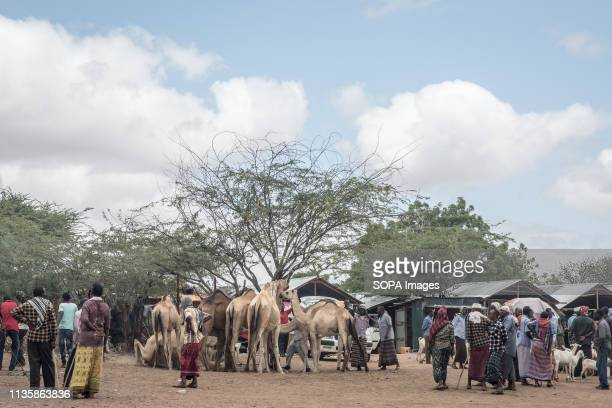 Camel traders seen chatting in the refugee camp. Dadaab is one of the largest refugee camps in the world. More than 200,000 refugees live there -...