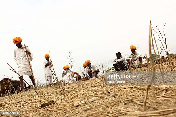 Camel traders sits on the ground at Pushkar, Rajsthan. Tourists are most interested to visit the Pushkar to explore the rugged terrain of the Great...