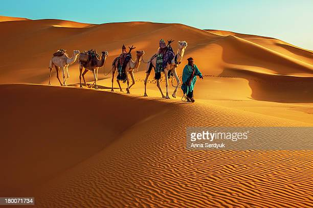 Camel train is a series of camels carrying goods or passengers or both in a group as part of a regular or semi-regular service between two points....