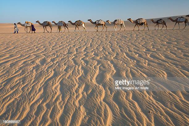 Camel train led by two people on the windswept sands of the Sahara desert in Mali.