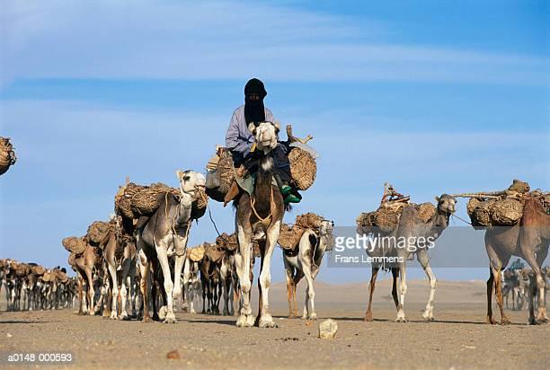 camel train - niger stockfoto's en -beelden