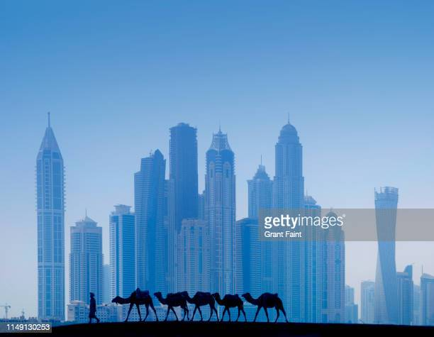 camel train walking by towers. - image photos et images de collection