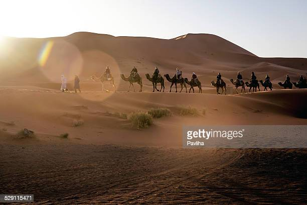 camel trekking, erg chebbi sand dune at sunrise, morocco, africa - camel train stock pictures, royalty-free photos & images