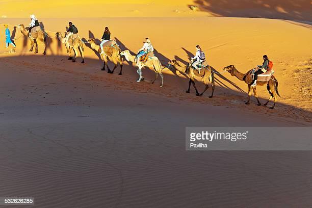 Camel Trekking, Erg Chebbi Sand Dune at Sunrise, Morocco, Africa
