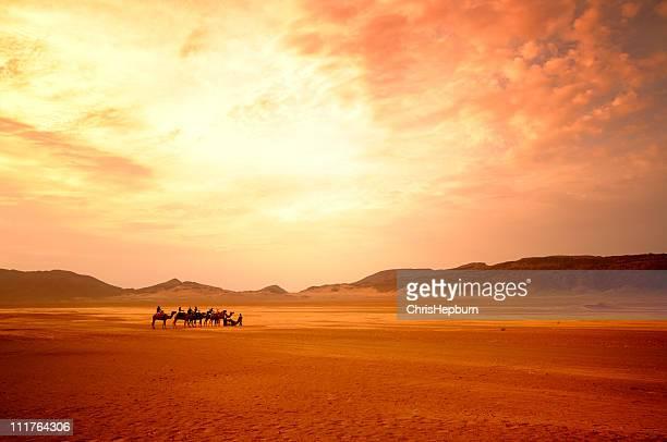 Randonnée en dromadaire, désert du Sahara