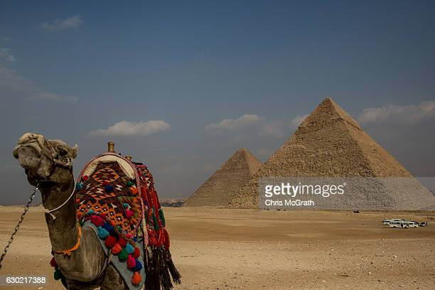 A camel used for tourist rides is seen in front of Egypt's famous Giza Pyramids on December 18 2016 in Cairo Egypt Since the 2011 Arab Spring and...