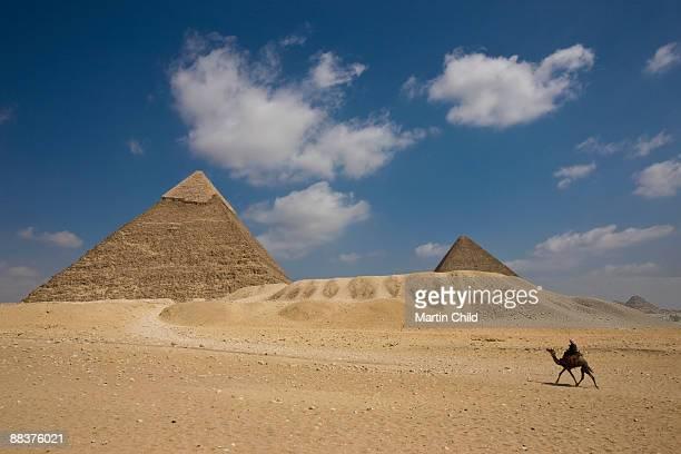 Camel walking towards Pyramid