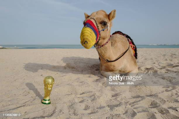 March 30 : A camel with a replica of the FIFA World Cup Trophy on the beach beside the Persian Gulf at Al Wakrah, a host venue for the Qatar 2022...