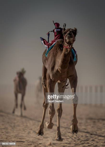 camel with baggage walking on dirt road - camel active stock-fotos und bilder
