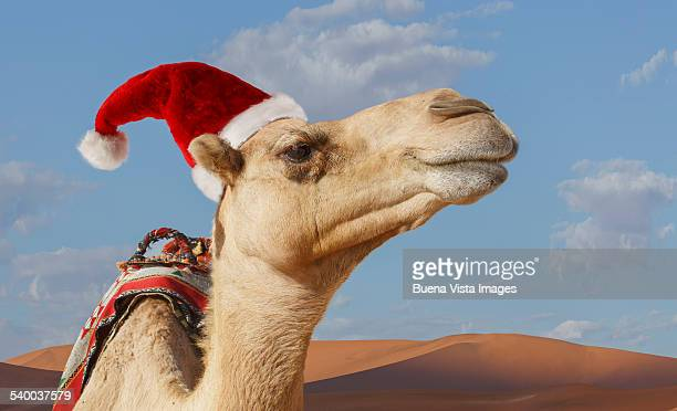 camel with christmas hat