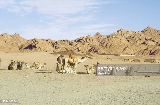 Camelier Kid