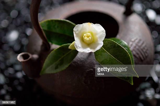 camellia on tea pot, close-up - wabi sabi stock pictures, royalty-free photos & images