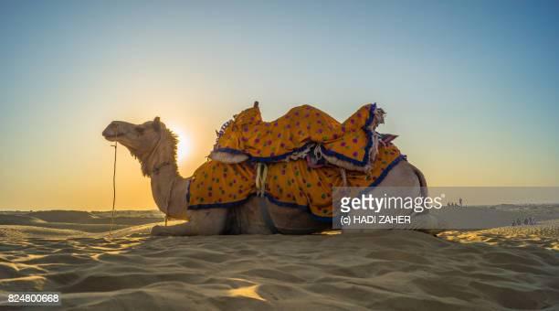 Camel-ride in the Thar Desert | Jaisalmer | Rajasthan | India