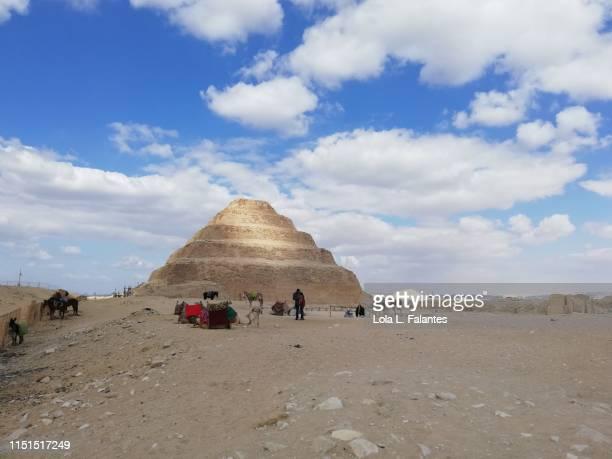 Camels and horses near the Steep pyramid of Djoser. Saqqara