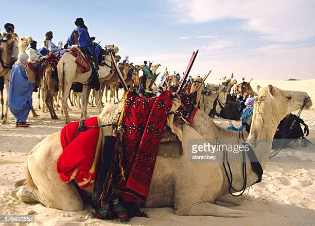 Camels and Tuareg Riders