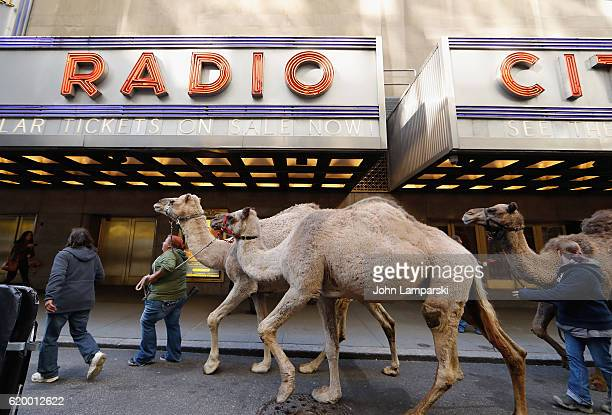 Camels are seen as Timothy Cardinal Dolan blesses the animals from the Christmas Spectacular living nativity scene at Radio City Music Hall on...