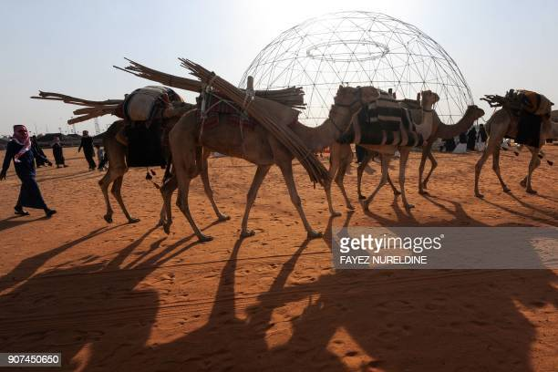 Camels are seen during a beauty contest as part of the annual King Abdulaziz Camel Festival in Rumah some 160 kilometres east of Riyadh on January 19...