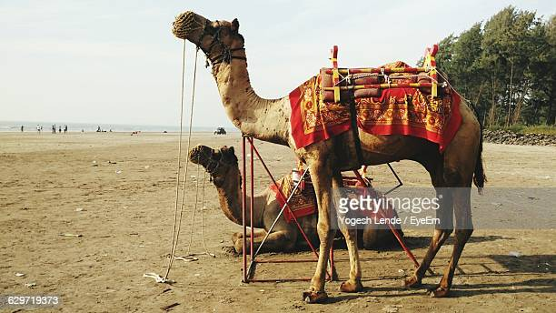 Camels At Beach Against Sky