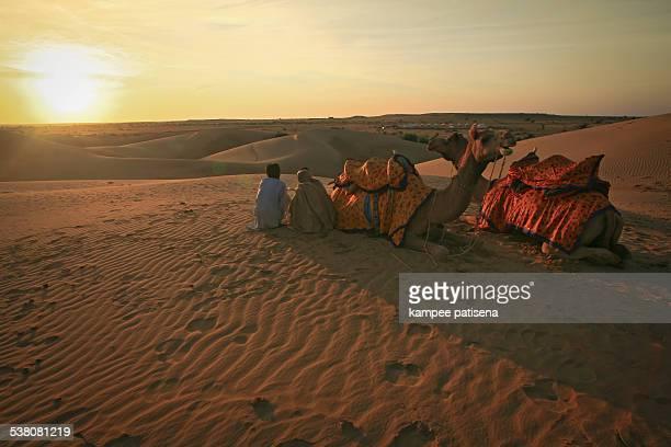 camels at sunset, Jaisalmer
