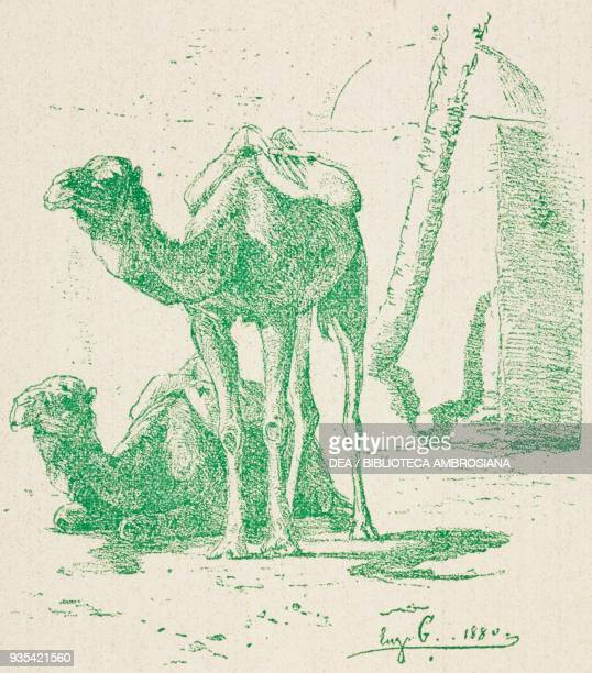 Camels Biskra Algeria by Eugene Girardet from Sketch and pen drawings by the most renowned artists series 2 animals 1900