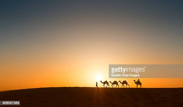 Camels caravan in desert at sunset