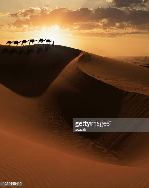 camels caravan on a dune - camel train stock pictures, royalty-free photos & images