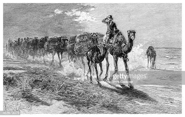 Camels carrying wool 1886 Wood engraving from 'Picturesque Atlas of Australasia Vol II' by Andrew Garran illustrated under the supervision of...