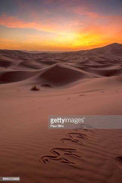 Camels drawn on sand, sunrise time at Erg Chebbi Sand Dunes, Morocco, North Africa