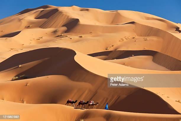 camels & dunes, erg chebbi, sahara desert, morocco - モロッコ ストックフォトと画像