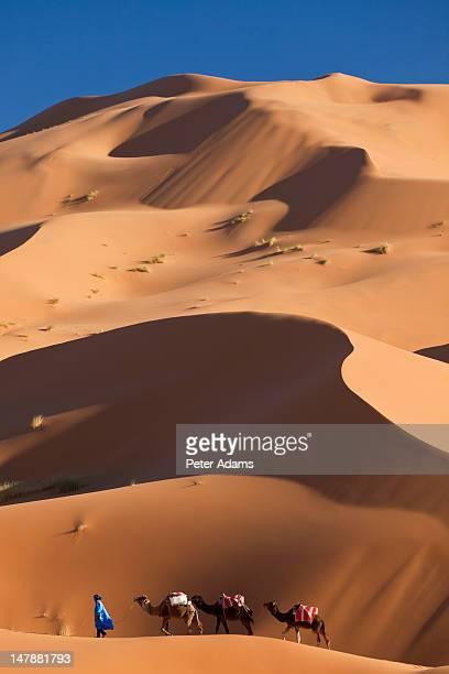Camels, Dunes, Erg Chebbi, Sahara Desert, Morocco