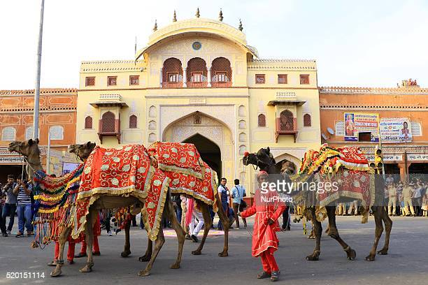 Camels during the traditional 'Gangaur' procession on the occasion of Gangaur Festival in Jaipur Rajasthan India 9th April2016 Gangaur is one of the...