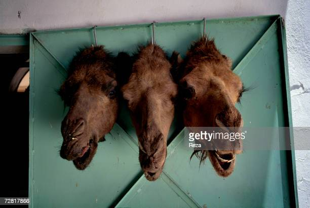 Camels' heads hang at a door as a sign of the butcher's shop in the modern town April 2000 in Ghadames Libya