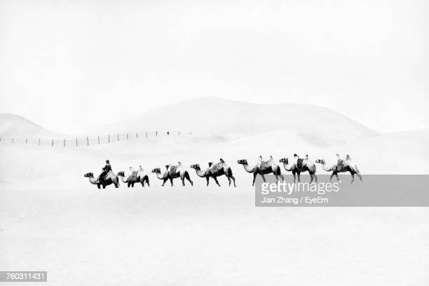 camels in desert against clear sky - camel train stock pictures, royalty-free photos & images