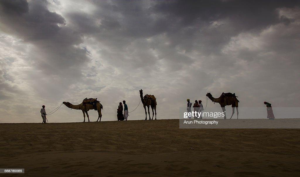 Camels in desert : Stock Photo