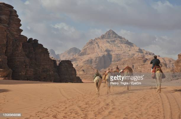 camels in gear in wadi rum desert, jordan. - camel train stock pictures, royalty-free photos & images