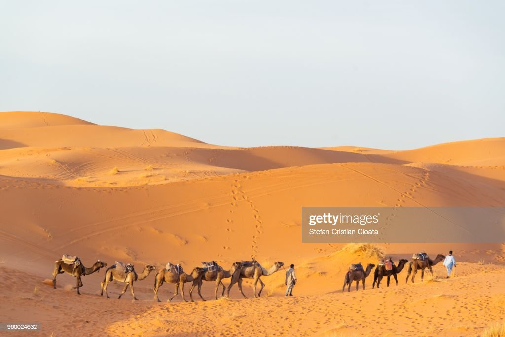 Camels in Sahara desert Merzouga, Morocco : Stock-Foto