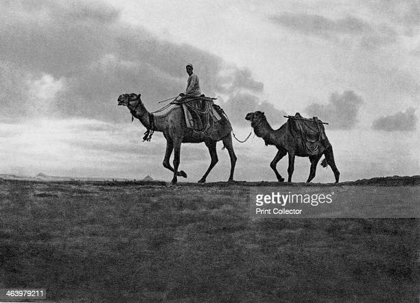 Camels in the desert outside Cairo Egypt c1920s Plate taken From In the Land of the Pharaohs published by Lehnert Landrock