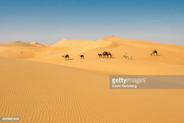 camels in the distance - キャメル色 ストックフォトと画像