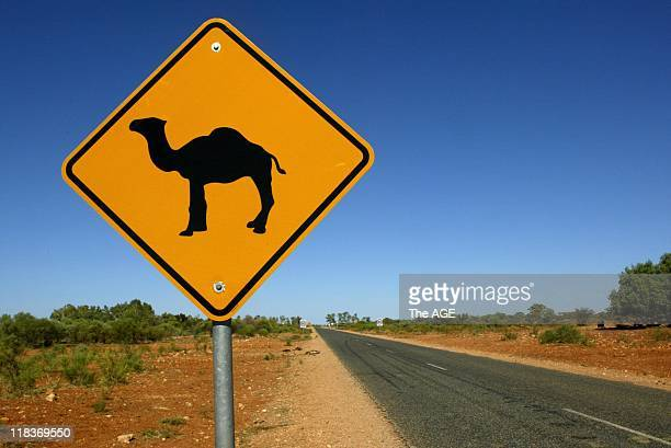 Camels in the wild Camel crossing warning sign in the Northern Territory 6 December 2004