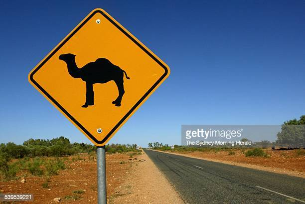 Camels in the wild Camel crossing warning sign in the Northern Territory 6 December 2004 SMH Picture by STEVEN SIEWERT