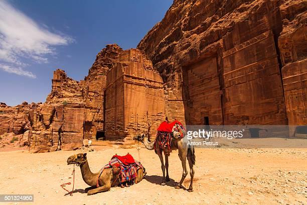 Camels near the tombs in Petra, Jordan