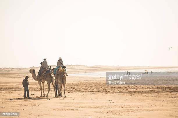 Camels on the beach Essaouira, Morocco