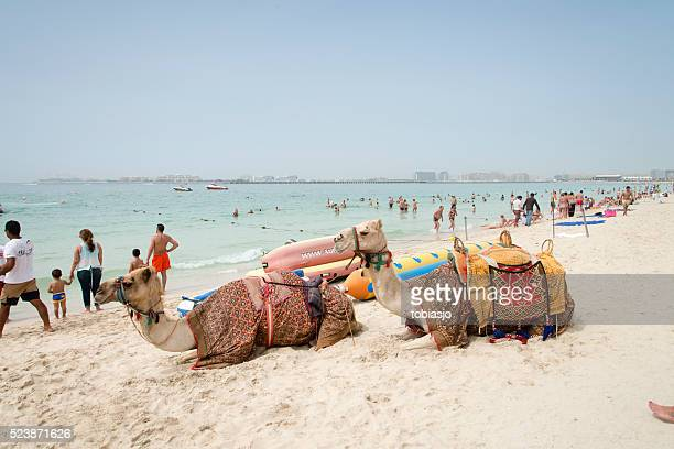 Camels on the Marina Beach Dubai