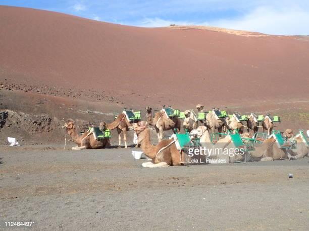 Camels place, Timanfaya
