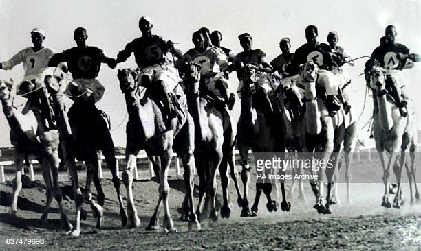 Camels race down the track in Khartoum at the meeting held in honour of the visit of Queen Elizabeth II